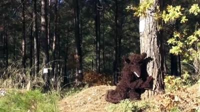 Planlı ağaç kesimine tepki - MUĞLA