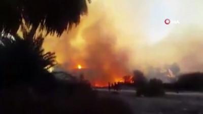 - Libya'da 10 bin palmiye ağacı kül oldu