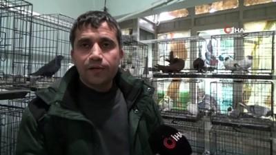 Diyarbakır'da 3 bina değeri 50 bin lirayı bulan güvercinler için otele çevrildi