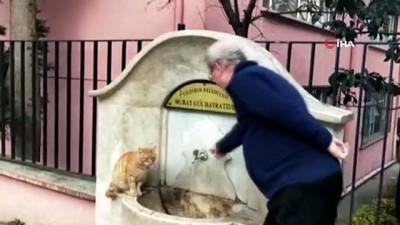 Çeşmeden su içen kedi ilgi odağı oldu
