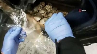 Sarp Sınır Kapısı'nda 5 bin 450 adet su kaplumbağası ele geçirildi
