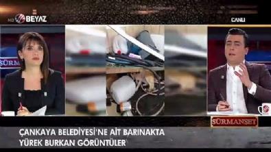 Osman Gökçek: 'Hayvanların da birer canlı olduğunu unutmamak lazım'