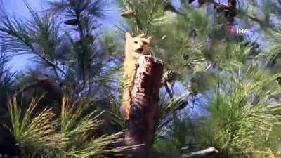 Çıktığı ağaçta mahsur kalan kedi vinçle indirildi