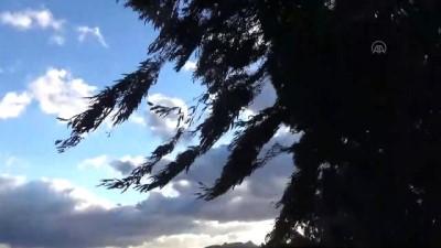 Bodrum'da şiddetli rüzgar hayatı olumsuz etkiliyor - MUĞLA