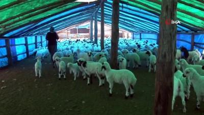 Şavak aşireti göçebe çobanlık yaparak geçimlerini sağlıyor