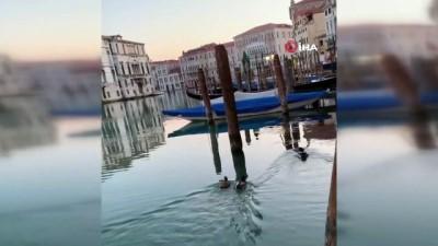 - İtalya'nın ünlü su kanallarına hayvanlar geri döndü