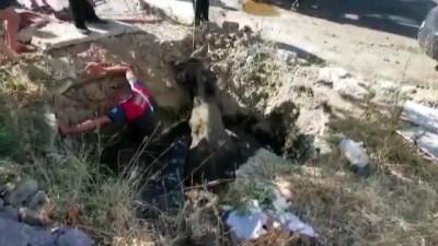 Foseptik çukuruna düşen inek ve buzağı kurtarıldı - MUĞLA
