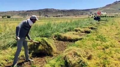 Mazıdağı'nda mercimek hasadı başladı