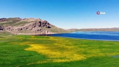 Yeşilin, mavinin ve sarının buluştuğu Keşiş Gölü'nün eşsiz güzelliği