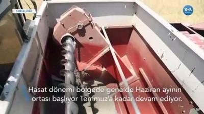 Kerkük'teki Çiftçiler Mahsullerini IŞİD'den Korumak İçin Topluyor