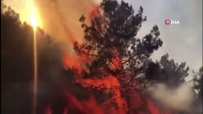 - İsrail'de binlerce dönümlük orman kül oldu