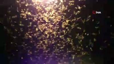 Şırnak'ta kelebek istilası