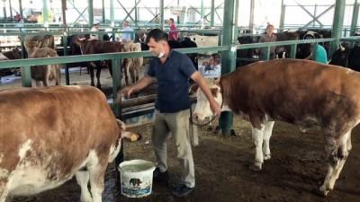 Hayvan pazarlarında satışlar Kovid-19 tedbirleriyle sürüyor - ESKİŞEHİR