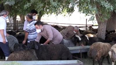 İran'da Kovid-19 nedeniyle kurbanlık satışlarında düşüş yaşanıyor - TAHRAN