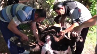 Erzincan'da acemi kasaplar hastaneye akın etti