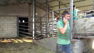 Türk Kızılay, Kuzey Makedonya'da 3 bine yakın aileye kurban eti dağıtacak - ÜSKÜP