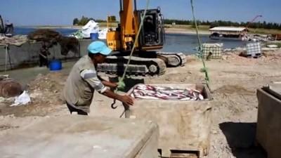 Hirfanlı Baraj Gölü'nde özel probiyotiklerle kırmızı etli somon üretiliyor - KIRŞEHİR