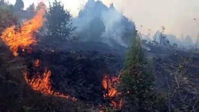 Kandıra'da ormanlık alanda çıkan yangına müdahale ediliyor - KOCAELİ