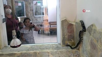 Senet mağdurlarını korkutmak için kullanılan kral piton hayvanat bahçesine konuldu
