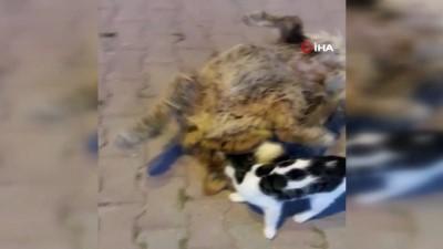Kediyle köpeğin dostluğu kamerada