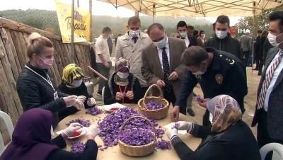 Karabük'te 4. Safran Festivali gerçekleşti