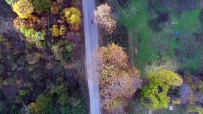 TEKİRDAĞ - (Drone) Ganos Dağı eteklerinde sonbaharın son günü büyülüyor