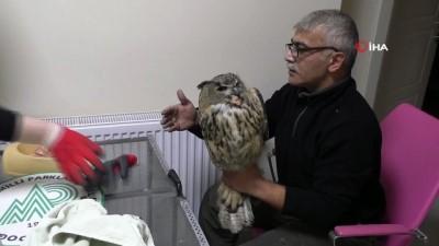 Soğuktan etkilenen Puhu kuşu tedavi altına alındı