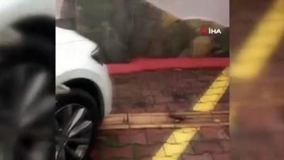 İguana'nın inadı...Tekerlek ile çamurluk arasına giren iguanayı çıkartmak için seferber oldular