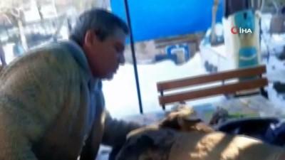 Yaralı karacayı hayata döndürmek için suni teneffüs yaptı