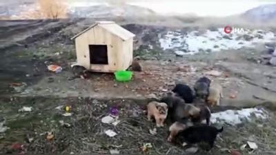 Annesiz kalan 12 yavru köpek koruma altına alındı