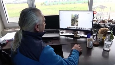 Ordulu balıkçıların ağlarına bin yıllık amforalar takıldı