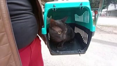 Beşinci kattan düşen kedisi kurtarıldı, gözyaşlarına boğuldu