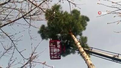 Mahsur kaldığı ağaçtan atlayan kediyi çarşaf gererek kurtardılar