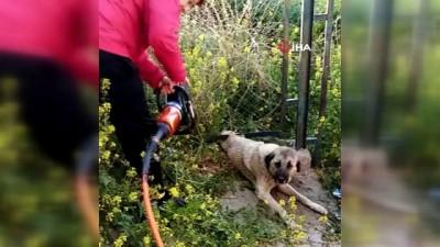 Demir korkuluk ile duvar arasına sıkışan köpek kurtarıldı