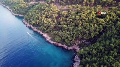 Nesli tehlike altında olan 'Akdeniz Fokları' görüntülendi