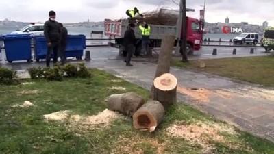 Ağaç kesen şüphelilere mahkemeden ders gibi karar: 200 adet fidan dikecekler
