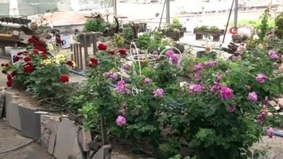 Görenleri şaşırtan bağ...Dükkanının üstünü bağa çevirdi, 100 çeşit bitki yetiştiriyor
