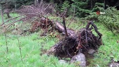 Kuvvetli rüzgar ağaçları kökünden devirdi