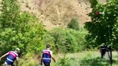 - Elazığ'da  uyuşturucu tarlasına operasyon,  6 bin kök kenevir ele geçirildi