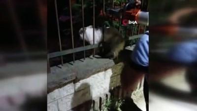 Demir korkuluklara sıkışan köpek kurtarıldı