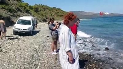 Dev köpekbalığı kıyıya vurdu