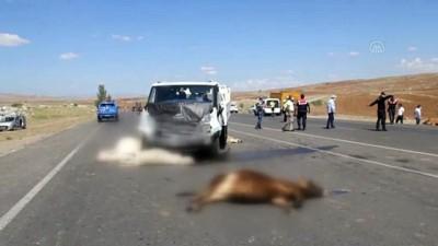 SİVAS -  Kamyonetin çarptığı sürüdeki 9 hayvan telef oldu