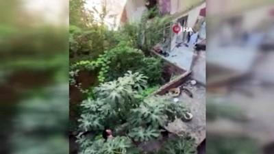 Komşuların 'kedi besleme' tartışması kamerada